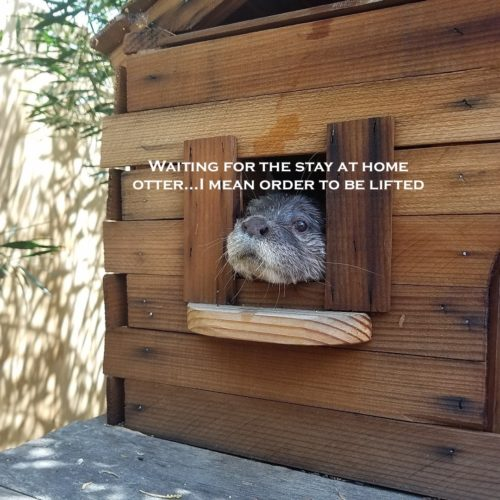 Stay at home order, stay at home otter
